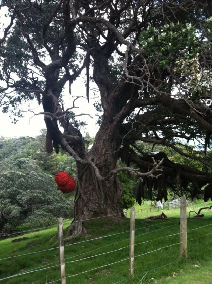 This Pohutukawa tree sits atop Kennedy Point and has become the symbol for the vineyards. Susan and Neal are artists who support the arts with sculptures such as these hung on the trees.