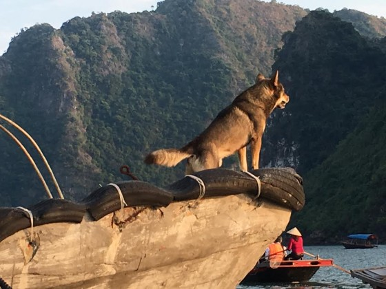 We only saw about five dogs in all of Hanoi, but lots of families have pets in Ha Long Bay.