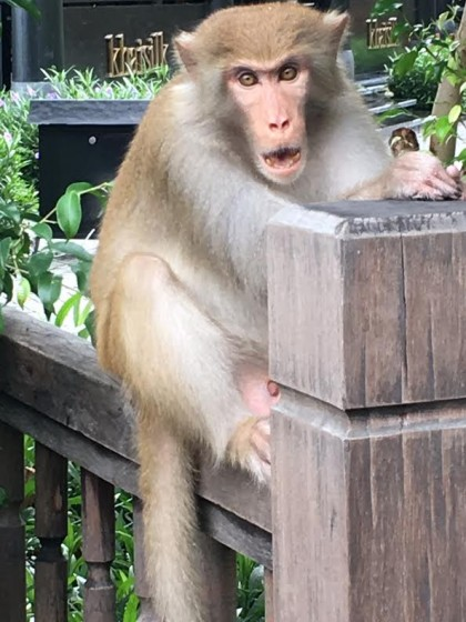 The original monkey that tried to attack Jerry.  Photo by Jerry Mayfield