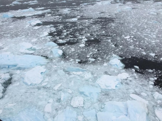 As we cruised through ice floes we could hear the ice crackling like a huge bonfire.