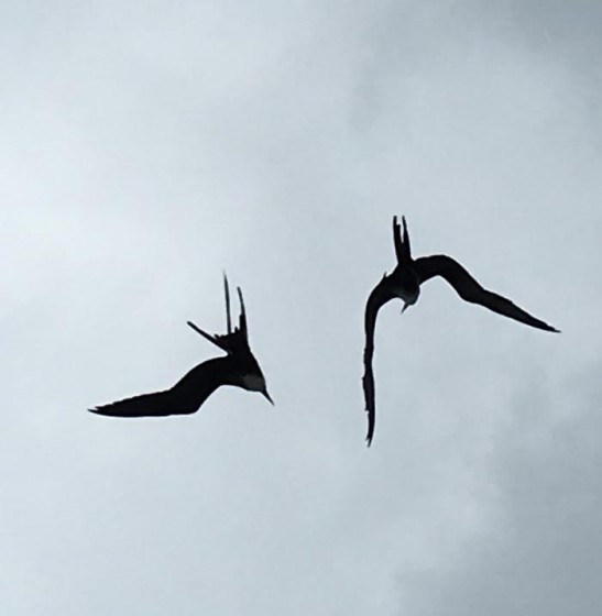 The bird life in South America is remarkable. A pair of birds kept pace with the ship for days!