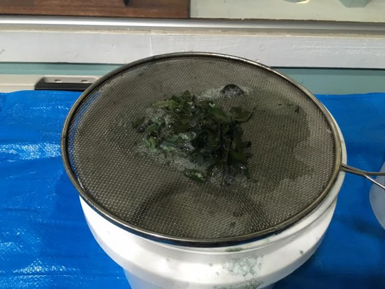 The green indigo leaves after being soaked and strained.