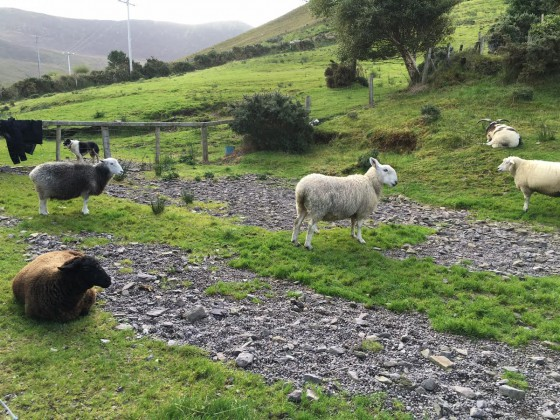 A few of the sheep varieties we saw.